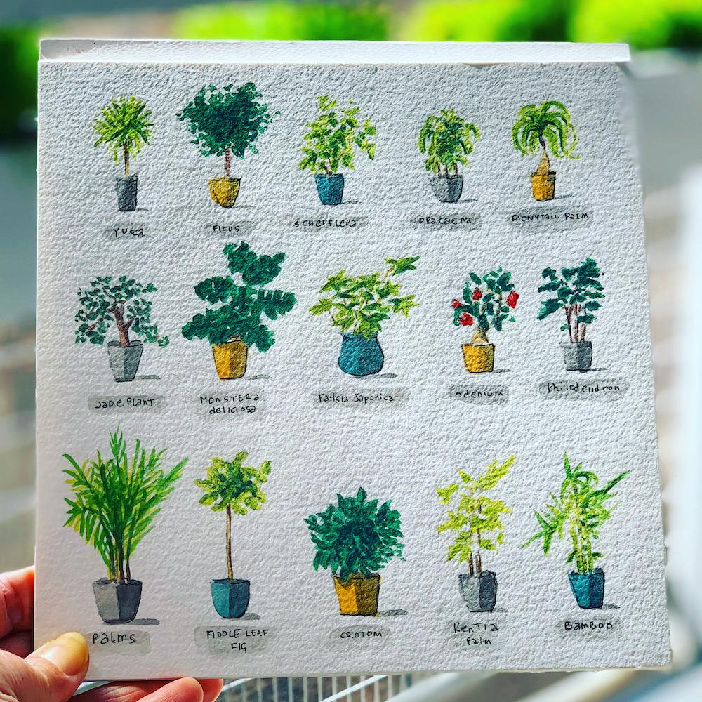 Watercolor houseplants